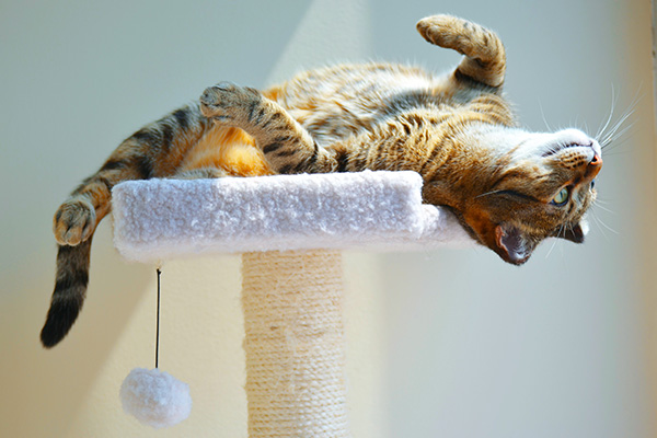 image-catboarding