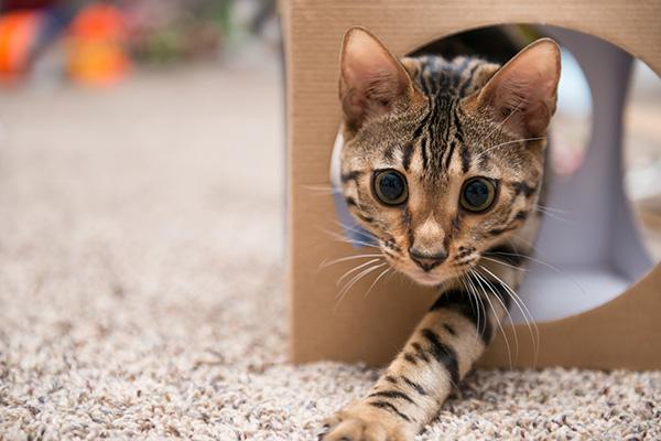 image-catboarding2