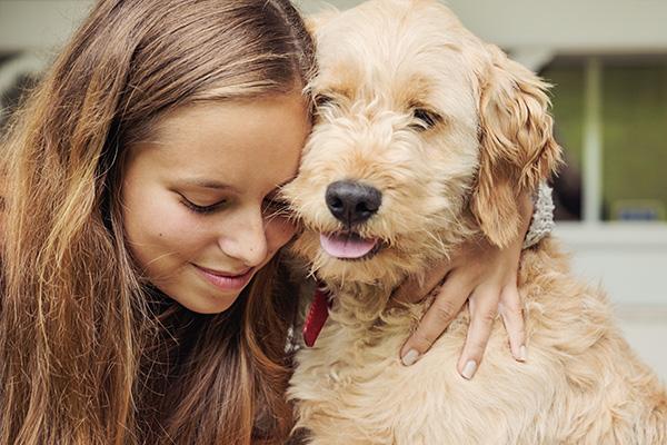 image-dogdaycare