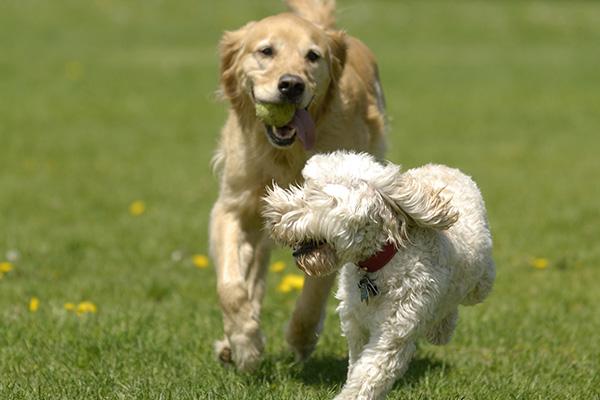 image-dogdaycare2