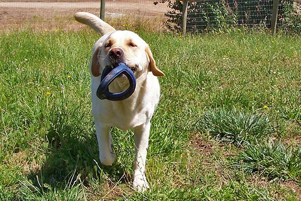 image-dogboarding5